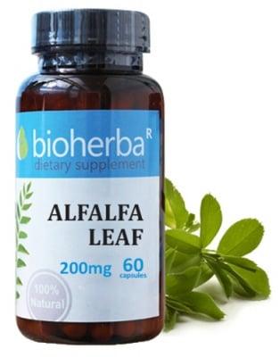 Bioherba Alfalfa leaf 200 mg 60 capsules / Биохерба Люцерна лист 200 мг. 60 капсули