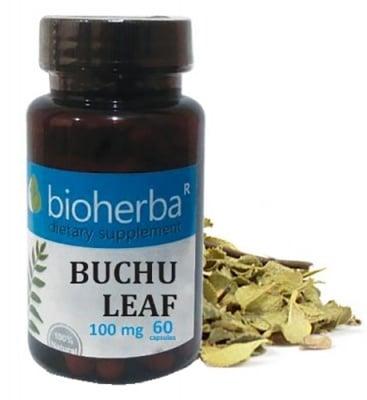 Bioherba buchu leaf extract 100 mg 60 capsules / Биохерба Бучу Лист 100 мг 60 капсули