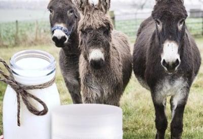 Магарешкото мляко - защо е използвано още от Клеопатра?