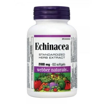 Webber Naturals Echinacea / Ехинацея, Брой капсули: 60