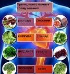 Най-добрите храни за хората, страдащи от анемия