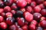 Червените боровинки - бомба от витамини и минерали за добро здраве