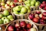 Защо за здравето ни е важно да ядем ябълки всеки ден?