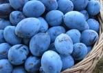 10 причини защо сините сливи са полезни за нас